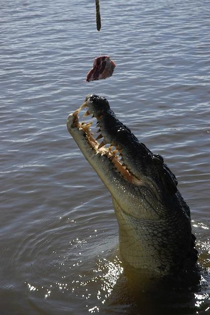 Relación entre humanos y cocodrilos.
