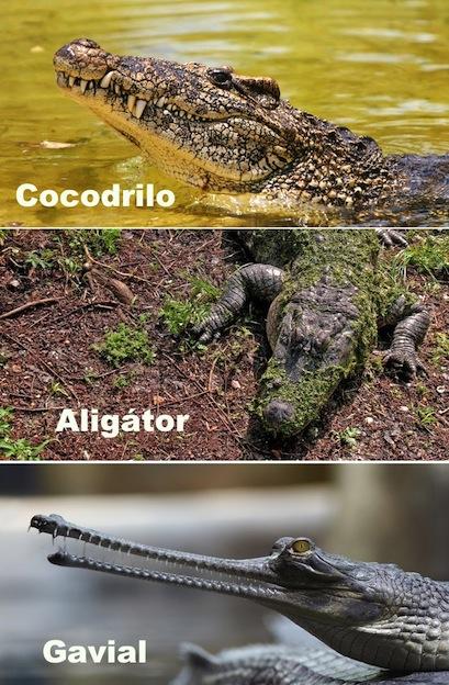 diferencias_coco_alig_gav