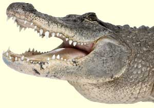 top crocodile facts
